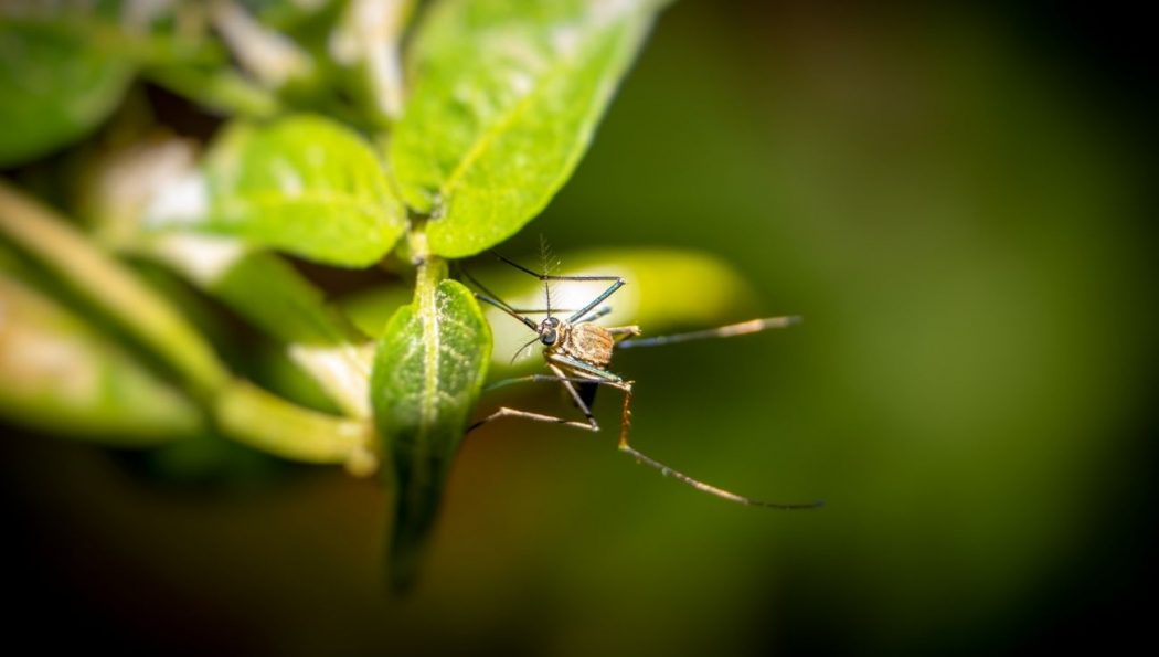 How to Deal with Mosquitoes in Your Garden