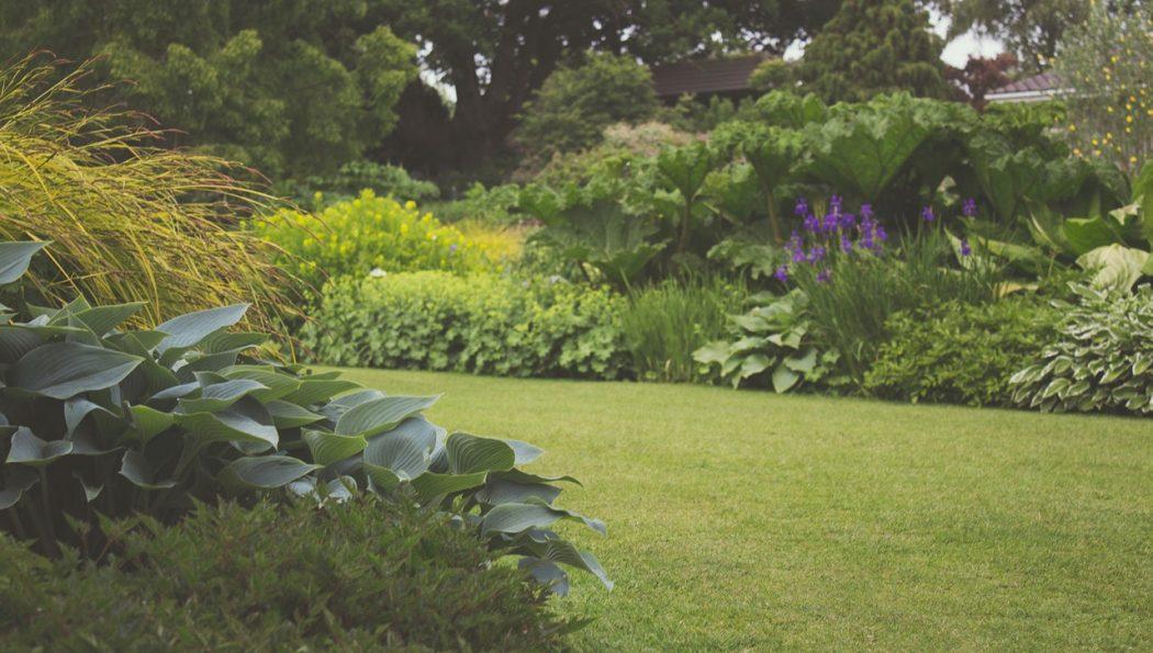 11 Natural Lawn Care Techniques