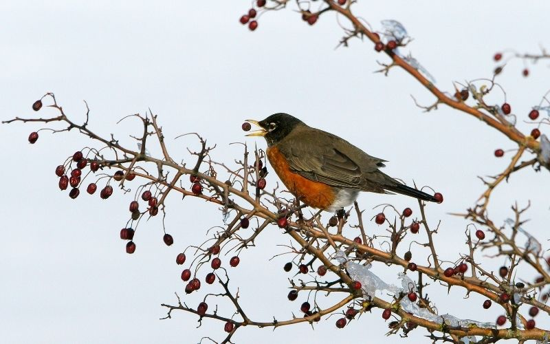 How to Stop Birds From Eating Your Garden Plants