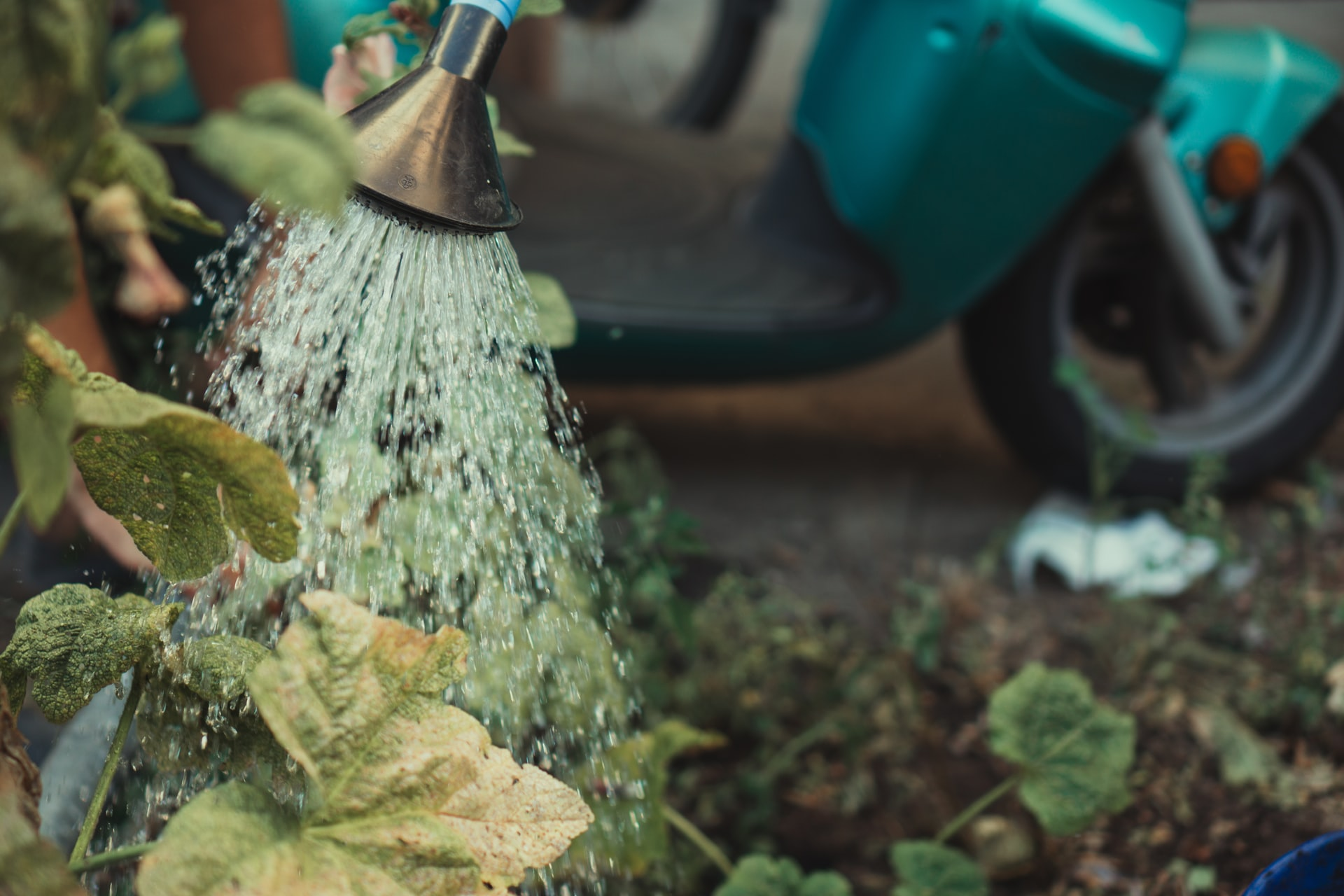 What Kind of Water Is Best for Your Plants?