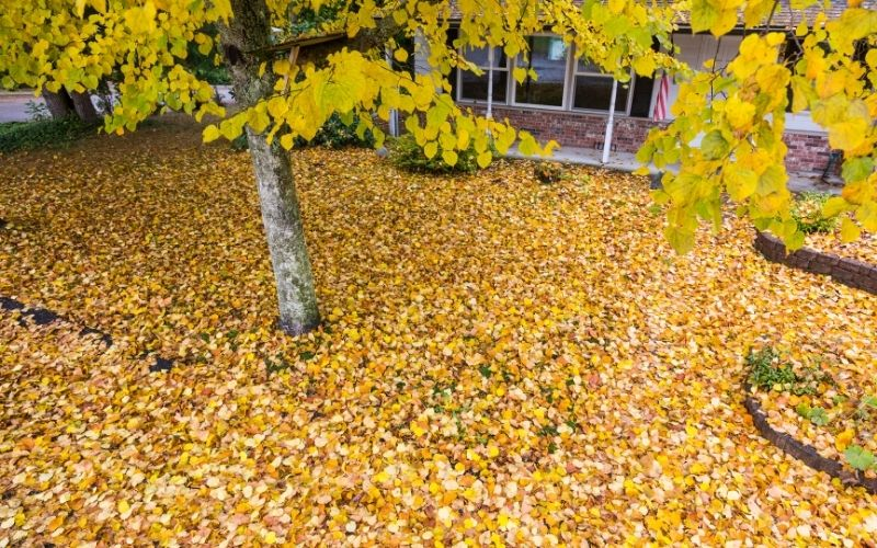 How to Deal with Fallen Leaves in Yard