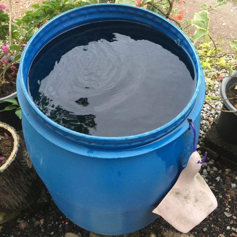 rainwater for plants