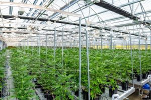 Hemp Industry Is Changing Agriculture