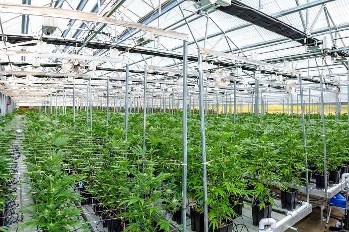 Top 3 Ways the Hemp Industry Is Changing Agriculture and the Economy